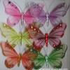 新产品 蝴蝶